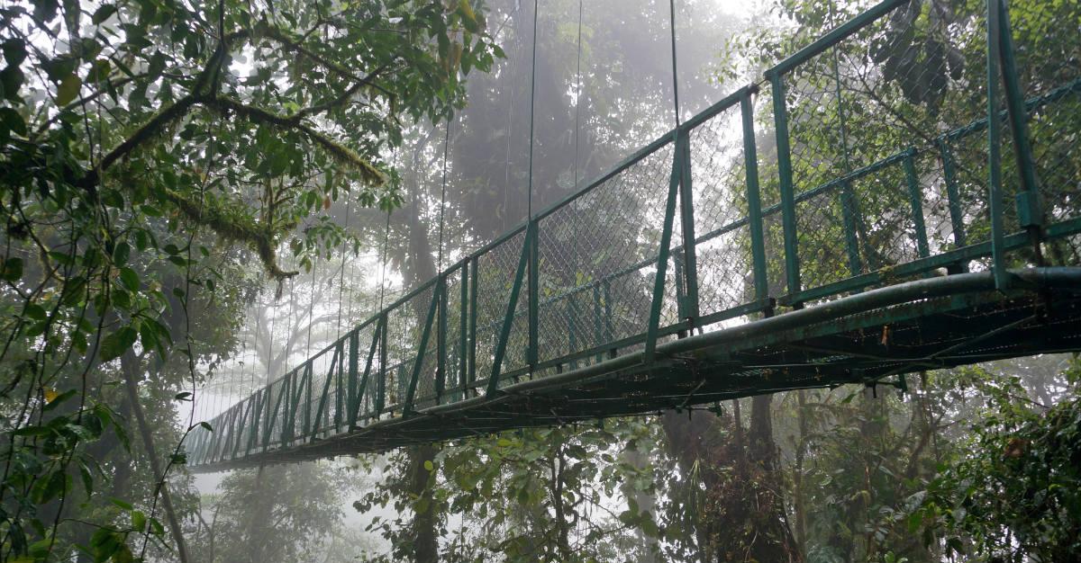 La réserve biologique de Monteverde semble sortir tout droit d'un succès commercial de Hollywood