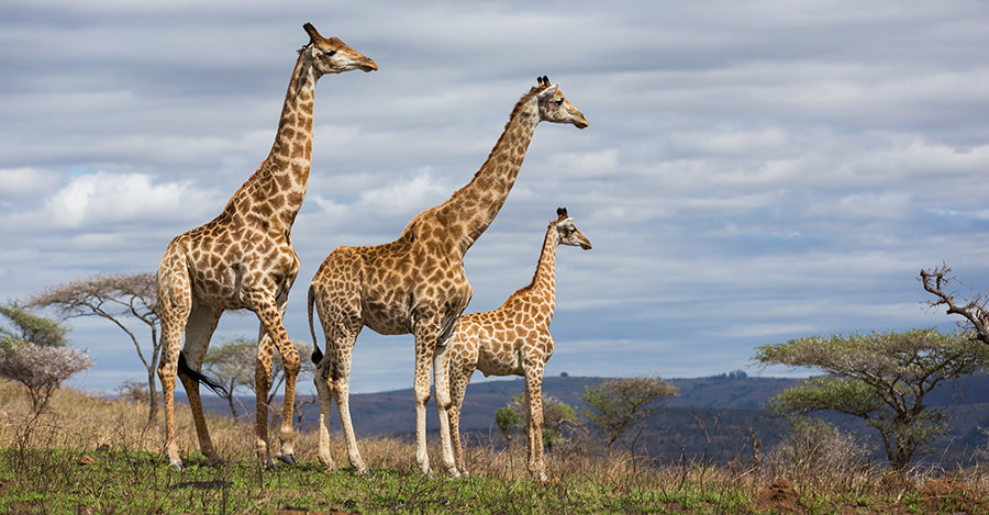 Desde safaris hasta grandes ciudades, Sudáfrica tiene mucho que ofrecer. Asegúrate de explorarlos de forma segura con las vacunas de viaje y los consejos de Passport Health.