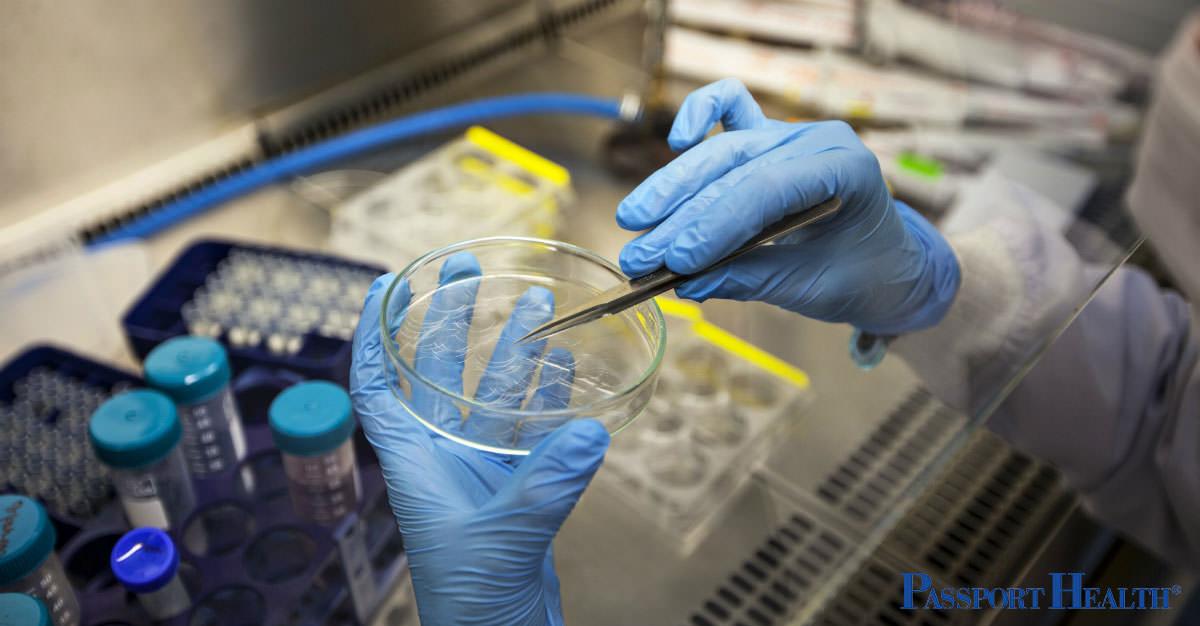 ¿Es el nanoparche el futuro de la vacunación?