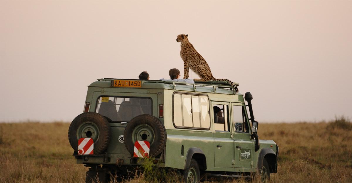 Un safari africain est absolument essentiel pour voir de près certains des animaux les plus majestueux et terrifiants de la planète.