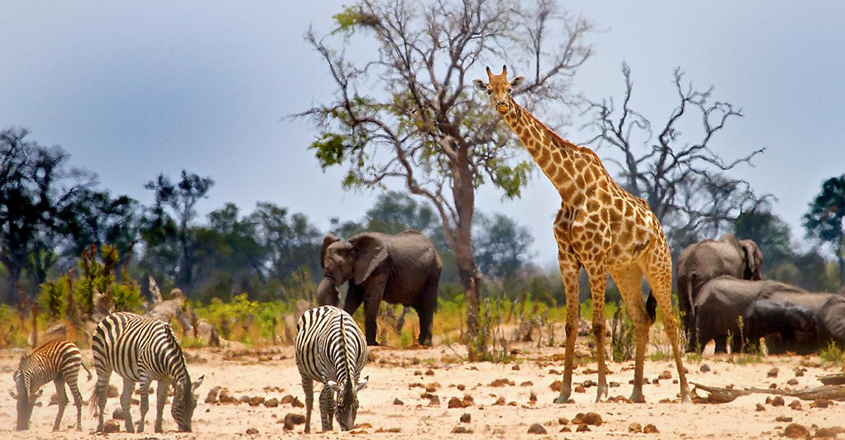 ¡Vámonos de safari a África!