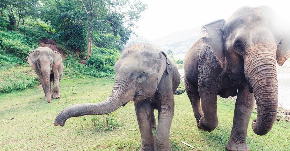 Conoce los santuarios de elefantes en Tailandia