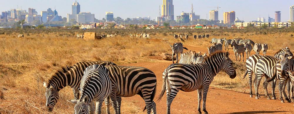 5 actividades que hacer en Kenia.