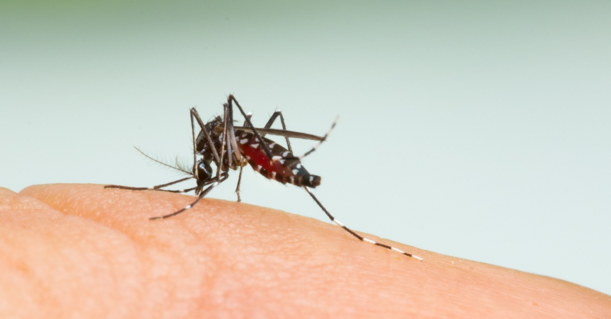 Mosquitoes have caused a rise in Eastern Equine Encephalitis cases in the US.