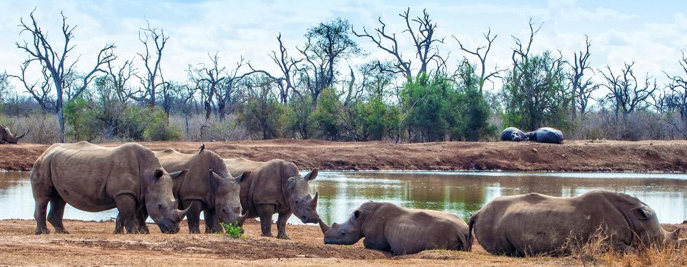 Suazilandia tiene de todo para explorar. Asegúrate de ir en forma segura con tus vacunas de viaje y los consejos de Passport Health.