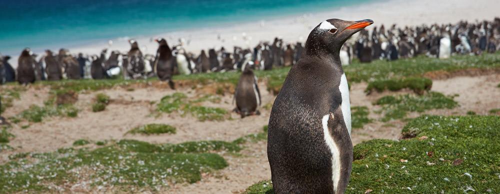 Las Islas Falkland tiene de todo para explorar. Asegúrate de ir en forma segura con tus vacunas de viaje y los consejos de Passport Health.
