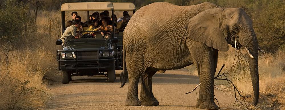 ¿Qué llevar a un safari en África?